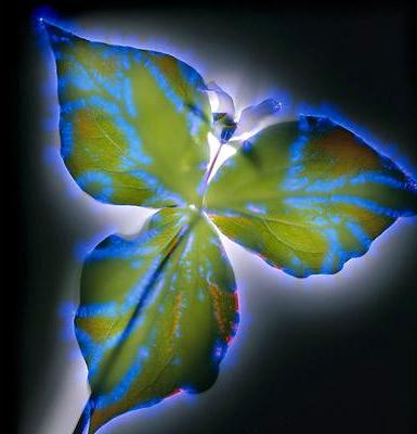 Hoa nhiễm điện